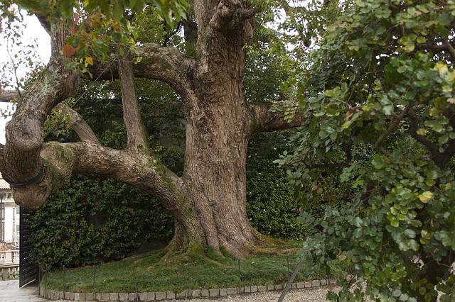 mohutný strom